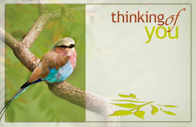 Thinking of you - Bird